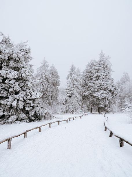 Taunus, Frankfurt, Taunus Nature Park, Winter, Snow
