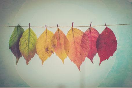 verfärbte Blätter, Persönlichkeit, Facetten, Vielfalt