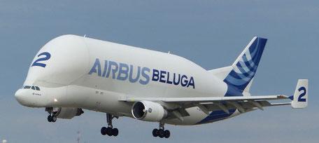 Frachtflugzeug Airbus Beluga im Landeanflug