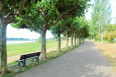 Bild: Rhein und Rheinallee Düsseldorf Heerdt Oberkassel, Initiative von der Stiftung für Heerdt von Anja und Andreas Bahners; Foto und Copyright: Stephanie Vennemann