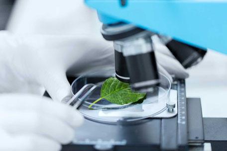 roller 14 huiles essentielles articulations