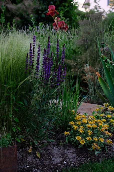 dieartigeGARTEN // Steppensalbei 'Caradonna', Federgras, Fetthenne, Bronze-Fenchel, Lavendel+Iris