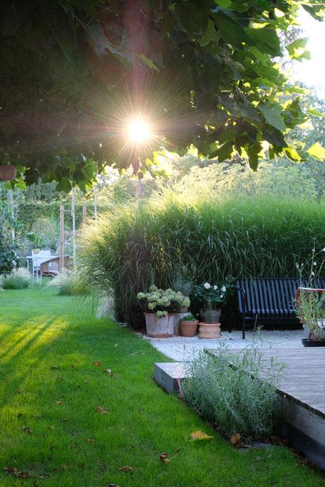 dieartigeGARDEN - Südterrasse + Outdoorsofa + Chinaschilf / patio + outdoor sofa + miscanthus