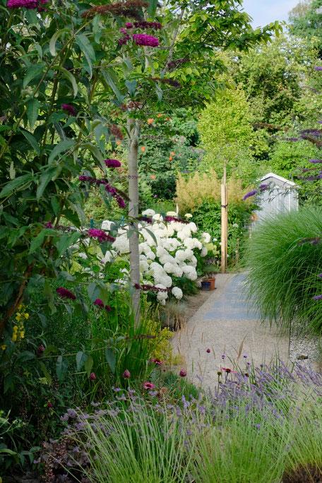 dieartigeGARDEN - Ballhortensien, Sommerflieder + Gräser / hydrangea, butterfly bush + grasses