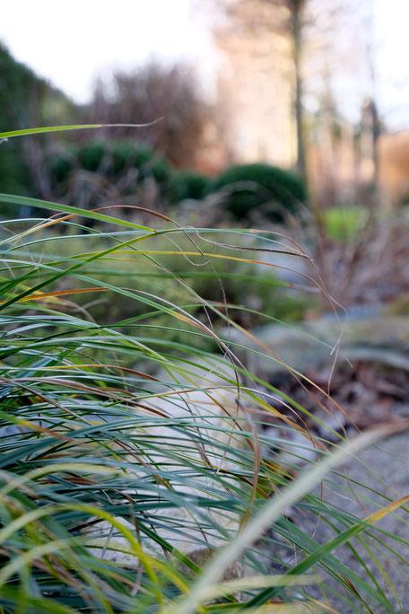 dieartigeGARTEN // Januar, Wintergarten - Wintergrünes Gras