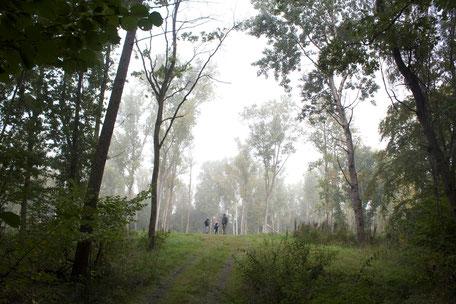 dieartigeBLOG - Herbstwald