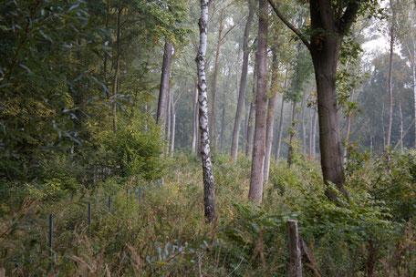 dieartigeBLOG - Herbstwald im Nebel