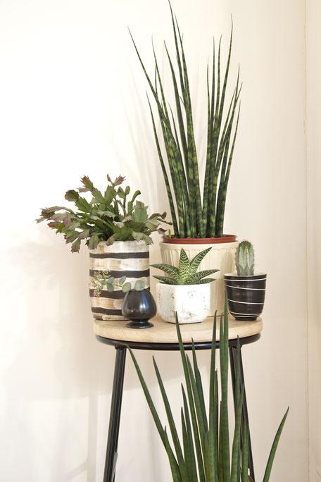 dieartigeBLOG - Dekoidee Grünpflanzen | grafisch + pflegeleicht