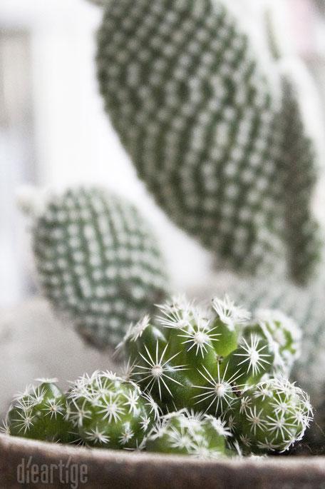 dieartigeBLOG - Kaktus