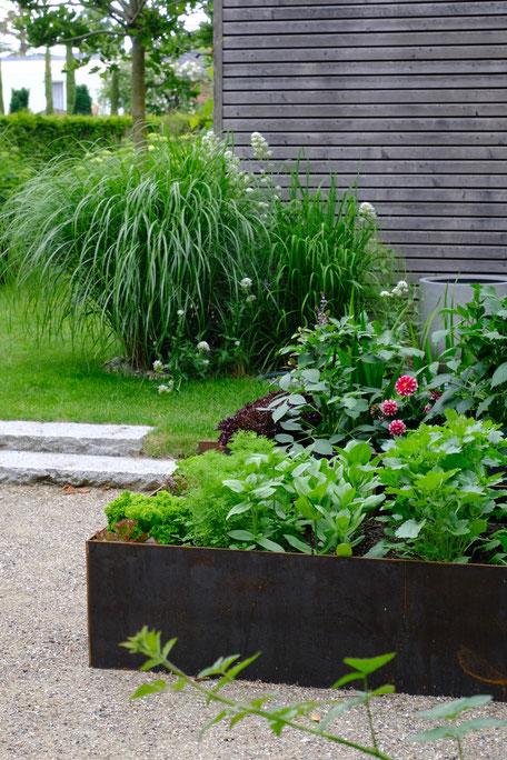 dieartigeGARTEN //June Garden - new high beds / neue Kniehochbeete mit Salat, Zinnien, Dahlien / Hintergrund Chinaschilf