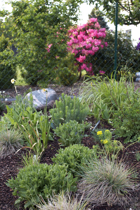 dieartigeBLOG - Kiesgartenbeet Anfang Mai | Bornholmer Granit