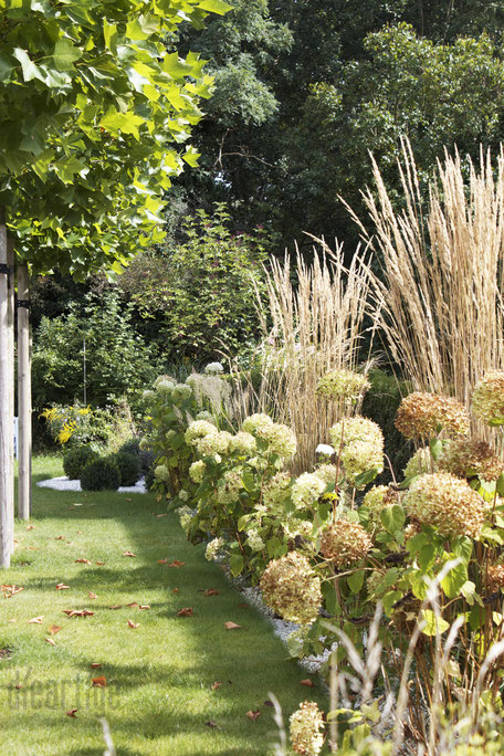 dieartigeBLOG - Herbst - Ballhortensien + Gartensandrohr