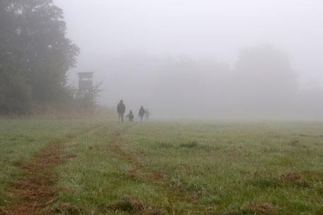 dieartigeBLOG - Morgennebel auf der Wiese