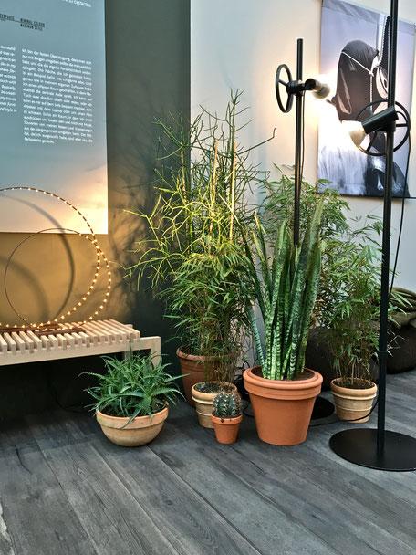 dieartigeBLOG - IMM Cologne 2017 - BloggerRoom | Zimmerpflanzen in Tontöpfen