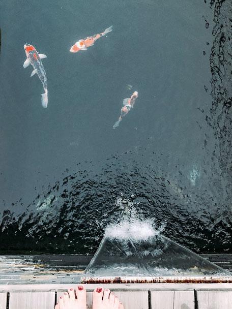 Fischteich im Hotel Chalet Mirabell in Hafling bei Meran, Südtirol