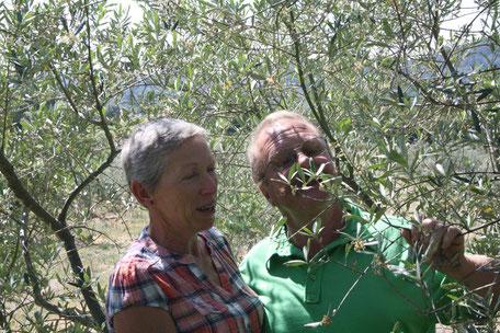 Chantal et Patrick Ochs Producteurs d'huile d'olive bio passionnés