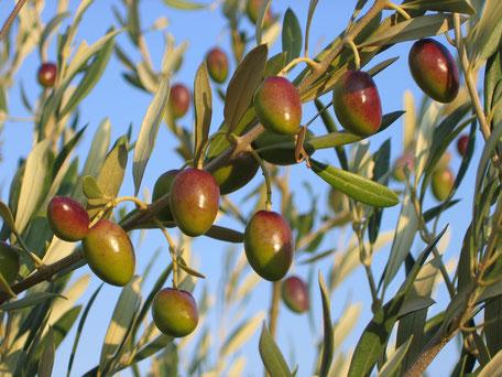 Fruité vert