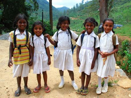 schoolkinderen in hun schooluniform tussen de theevelden