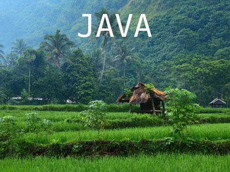 Rijstvelden op Java Indonesie