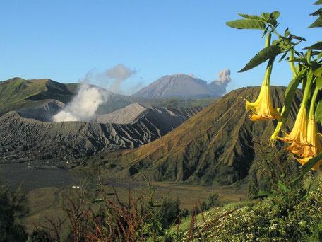 Uitzicht op de Bromo en Semeru vulkaan