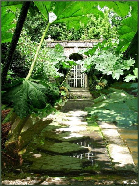 La Grotte Italienne et l'étonnant passe-pied donnant l'impression de marcher sur l'eau sous les Rhubarbes géantes (Gunnera manicata) - Les Jardins du Kerdalo à Trédarzec, Côtes d'Armor (22)