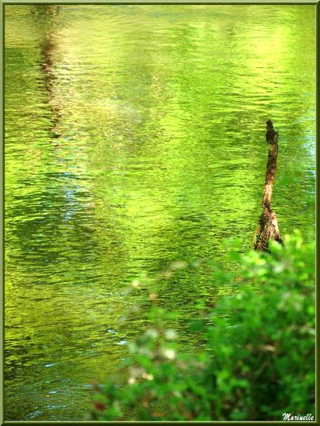 Bois, verdure et reflets en bordure de La Leyre, Sentier du Littoral au lieu-dit Lamothe, Le Teich, Bassin d'Arcachon (33)