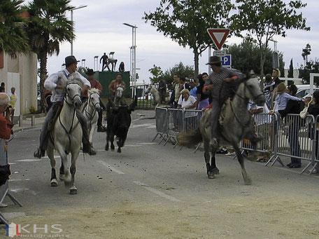 Bild: ein Stier wird durch die Straßen von Le-Grau-du-Roi getrieben