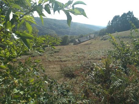 Het grasland achter de boerderij