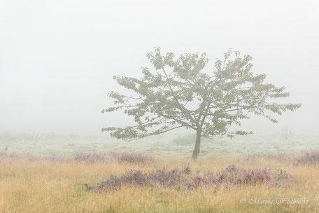 Baum im  Nebel 1