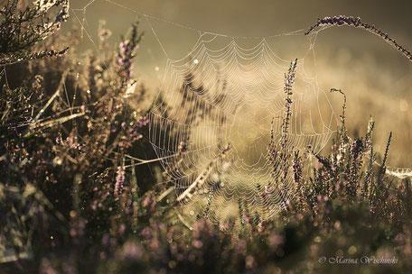 Netz im goldenen Licht