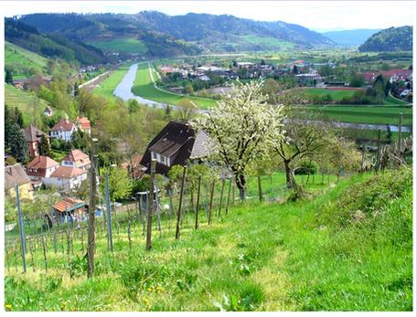 Bergblick bei Gengenbach
