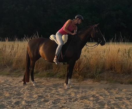 Beritt und Training für Pferde