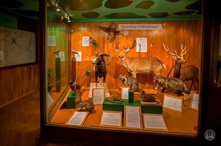 Privates Museum für Tierkunde Berlin. Vitrine der tierischer Importe