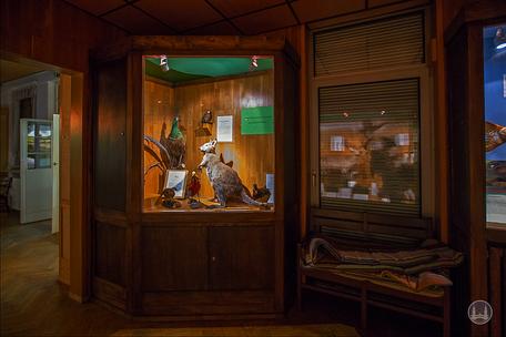 Privates Museum für Tierkunde Berlin. Tierische Einwanderer