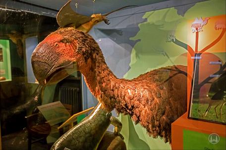 Privates Museum für Tierkunde Berlin. Ausgestorbener Dodo
