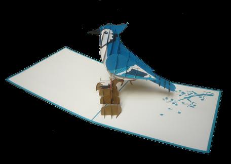 Carte pop-up geai bleu - magnifique oiseau