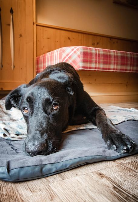 Hundefreundliche Hotels Urlaub mit Hund Bergurlaub mit Hund