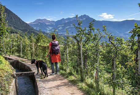 Bergurlaub mit Hund Urlaub mit Hund Wandern mit Hund  Waalwege Südtirol Algunder Waalweg