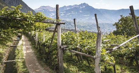 Algunder Waalweg Dorf Tirol Südtirol Wandern mit Hund in Südtirol Bergurlaub mit Hund