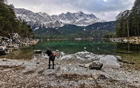 Eibsee Zugspitze Wandern mit Hund Bergurlaub mit Hund