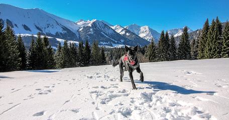 Hörnlepaß Riezlern Kleinwalsertal Allgäu Wandern mit Hund