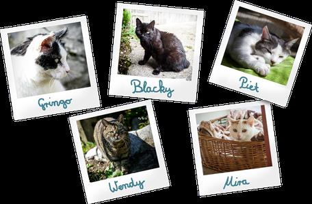 Link zu Tierpatenschaften. Fünf Polaroidfotos, Katzen für die eine Patenscheft übernommen werden kann. Gringo, Blacky, Piet, Wendy, Mira.
