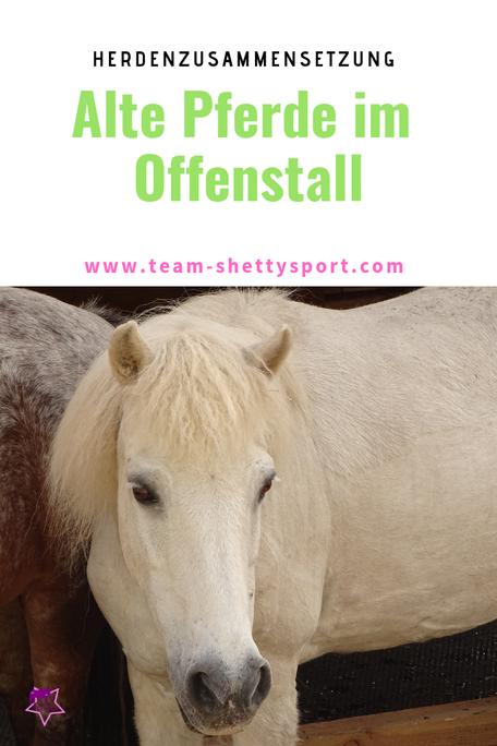 Alte Pferde im Offenstall: darauf solltest Du achten, damit Dein Pferd genügend Futter und Ruhe bekommt.