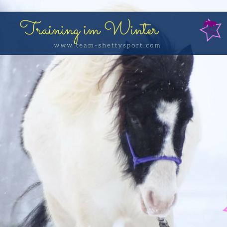 Pferdetraining im Winter, Shetty, Pferd, Schlitten