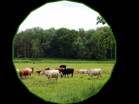 Bio Grundsätze | artgerechte Tierhaltung