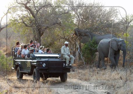 Rondreis Zuid-Afrika Safari Bobotie Reizen Safari olifanten