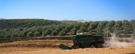 【スペイン・ウアルド社 農園】スペイン・トレドの地で最新の農業技術と高い知識で丁寧なケアで健康に栽培。 世界で最も美しい農園の一つ。