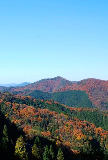兵庫県 丹波 篠山 自然  田舎