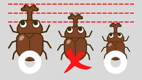 カブトムシの大きさを比較した絵