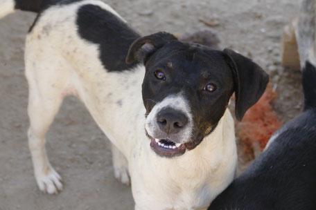 Hunde in Not suchen ein Zuhause